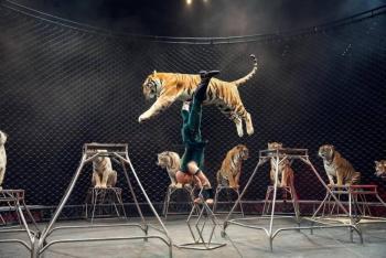 El INAI ordena a la Semanart dar a conocer el destino de los animales que se encontraban en circos