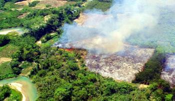 Senado pide reforzar campañas informativas sobre repercusiones de tala forestal y selvática