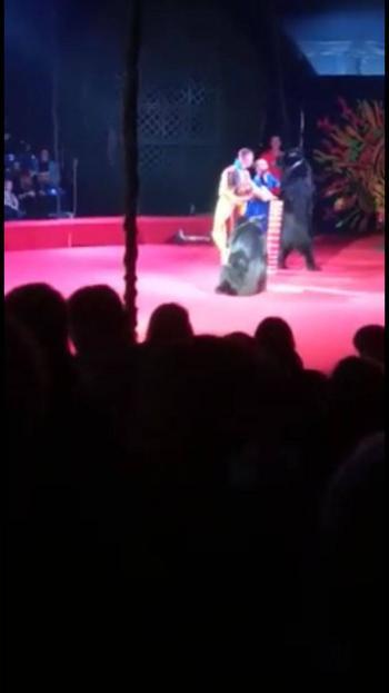 Video: En pleno show de circo, oso ataca a entrenadora