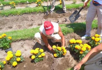 Ponen a la venta flores de cempasúchitl cultivadas por presos
