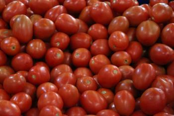 """México investigará denuncia de """"trabajo forzado"""" en exportadoras de tomate"""