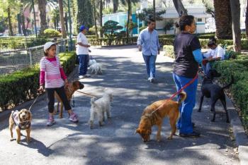 Educación, información y responsabilidad, esenciales para convivir con animales de compañía