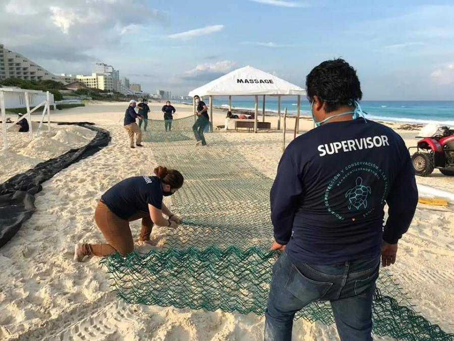 Liberación de Tortugas en Puerto Morelos