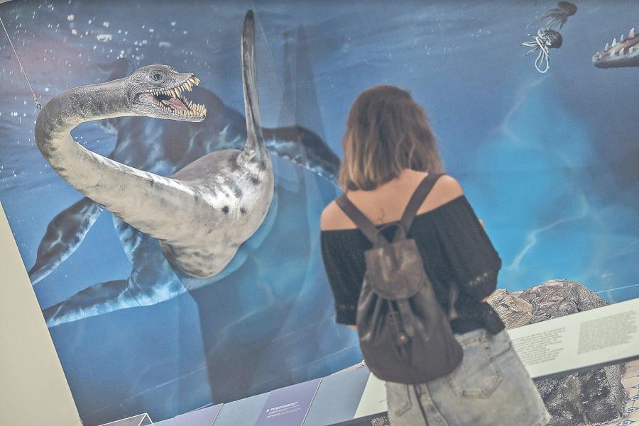 Con expo de Antártida, museo de Brasil renace de las cenizas