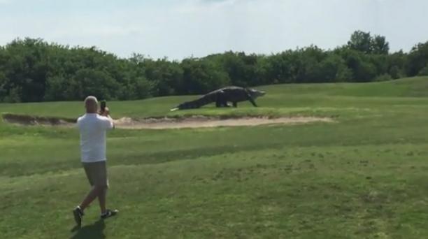 Cocodrilo reaparece en campo de golf en Florida