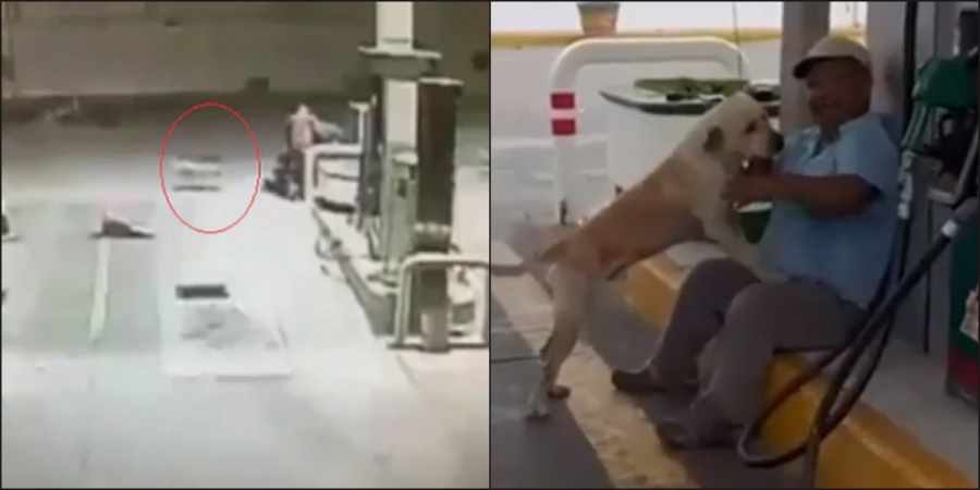 """Un perro llamado """"Randy"""" impide asalto a gasolinería en Tamaulipas"""