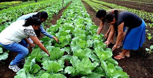 Mujeres fortalecen producción de alimentos en sector agrícola