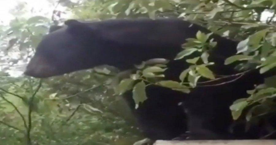 Así fue como un oso sorprendió a la comunidad de la UANL (video)