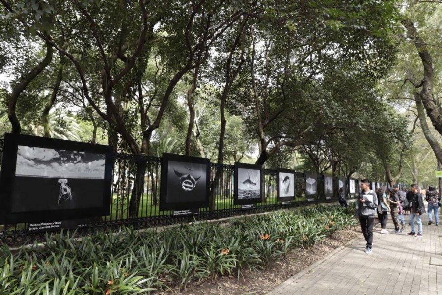 Inauguran exposición de Vizl en las Rejas de la Casa del Lago