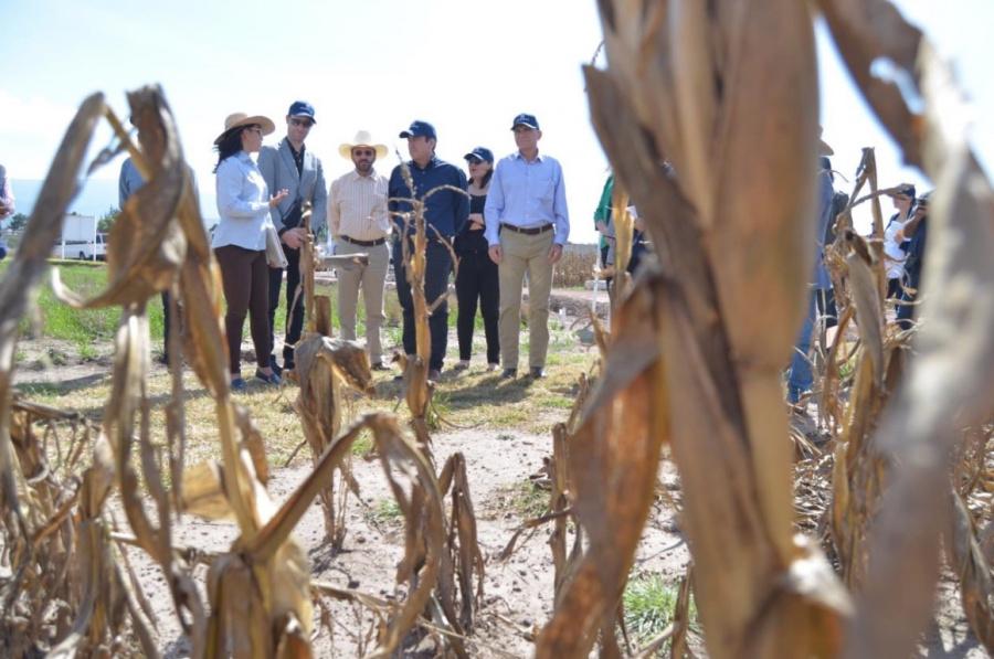Destacan rendimiento de maíz y trigo con programa de Sagarpa