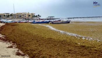 Se espera la llegada masiva de sargazo al Caribe para este 2019