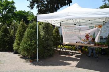 Azcapotzalco inicia trueque de árboles de navidad por plantas de ornato